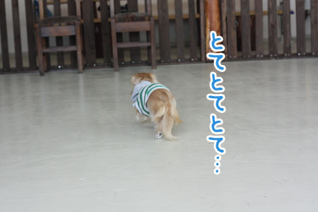 hana20100404004.jpg