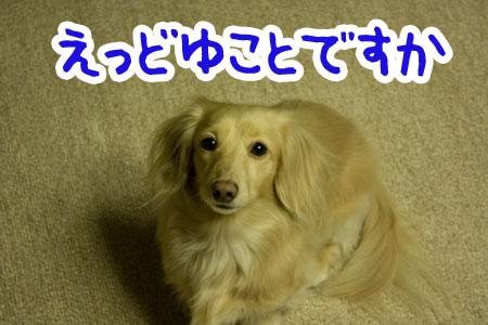 hana20110129001.jpg